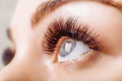 Eyelash Extension Procedure. Woman Eye with Long Eyelashes. Close up, selective focus. Royalty Free Stock Photo
