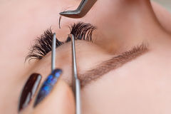 Eyelash Extension Procedure. Woman Eye with Long Eyelashes. Lashes, close up, macro, selective focus. Royalty Free Stock Photos