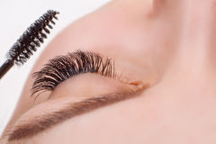 Eyelash Extension Procedure. Woman Eye with Long Eyelashes. Lashes, close up, macro, selective focus. Royalty Free Stock Images