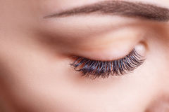 Eyelash Extension Procedure. Woman Eye with Long Eyelashes. Lashes, close up, macro, selective focus. Royalty Free Stock Photos