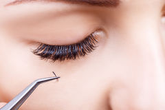 Eyelash Extension Procedure. Woman Eye with Long Eyelashes. Lashes, close up, macro, selective focus. Stock Image