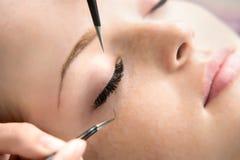 Eyelash Extension Procedure. Woman Eye with Long Eyelashes. stock image
