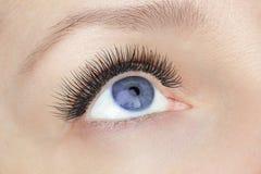 Eyelash extension procedure - woman fashion blue eye with long false eyelashes close up macro, beauty, make up and visage concept royalty free stock images