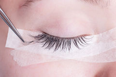 Eyelash extensions in the salon. Young beautiful girl is getting eyelash extensions royalty free stock photo