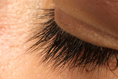 Eyelash macro Stock Photography