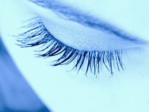 Eyelashes Stock Image