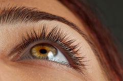 Eyelashes. Photo of natural eyelash or eyelashes of a young female Stock Images