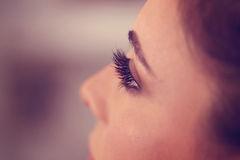 Eyelashes of a woman Stock Photography