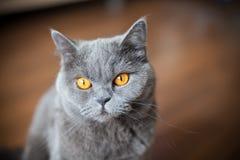 eyes помеец Стоковая Фотография RF