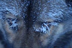 Eyes Stock Photo
