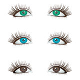 Eyes. Stock Image