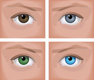 Eyes. Vector illustration - a realistic human eye (four colors
