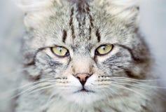 The eyes. Of stray cat Stock Image