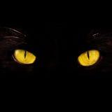 Eyes. Wild yellow eyes isolated on black Stock Images