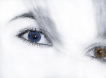 Eyes. Woman eyes and hair Stock Image