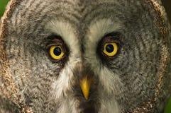 Eyes Stock Image
