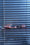 Eyes. Girl's eyes looking through window blinds Stock Images