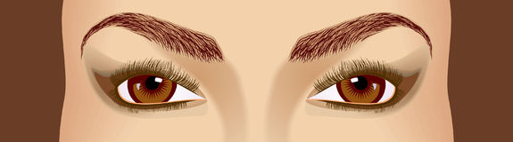 Eyes. Female beautiful brown eyes and eyebrowes. A direct sight Royalty Free Stock Image