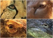 Eyes of animals Stock Image