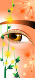 Eyes as chrysanthemums. Eyes like a flower chrysanthemums Royalty Free Stock Photos
