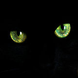 Eyes of a black cat. Green eyes of a black cat, portrait close-up stock photo