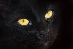 Eyes of a black cat. Yellow eyes of a black cat, portrait close-up royalty free stock photos