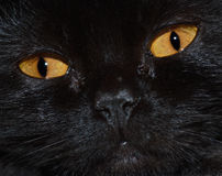 Eyes of a black cat Stock Images