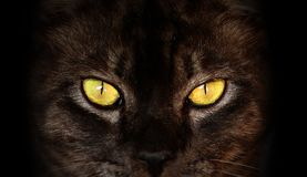 Eyes of black cat in dark. Hypnotic Cat Eyes Royalty Free Stock Photos
