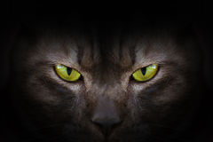 Eyes of black cat in dark Royalty Free Stock Image