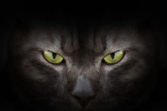 Eyes of black cat in dark Royalty Free Stock Image