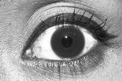 Eyes brown iris black white Royalty Free Stock Photography