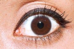 Eyes brown iris closeup Royalty Free Stock Images