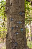 Eyes carved in tree trunk. Royalty Free Stock Photography