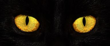 Eyes cat Royalty Free Stock Photography