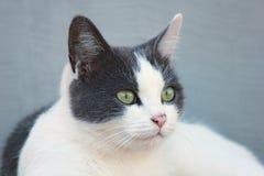 Eyes. Cat`s focused eyes on bird royalty free stock images