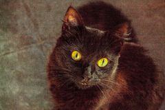 eyes of the cat royalty free stock photo