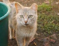 Eyes cats Royalty Free Stock Photo