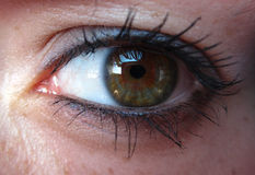 Eyes / Oeil Royalty Free Stock Images