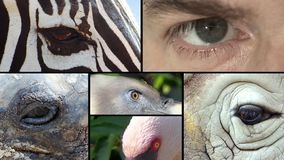 Eyes, collage stock footage