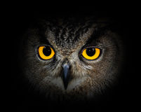 Eyes a coruja de águia fotos de stock royalty free