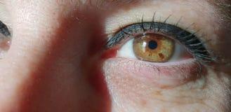 eyes den gröna illustrationvektorn för kvinnlign Fotografering för Bildbyråer