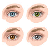 Eyes with different colors. Oval-shaped eyes with blue, green, brown and gray irides, on light skin Royalty Free Stock Image