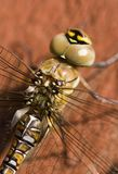 Eyes of the dragonfly Royalty Free Stock Photo