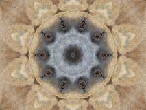 Eyes & Ears Abstract royalty free stock image