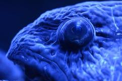 Into the eyes of an eel stock photos