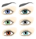 Eyes and eyebrows Royalty Free Stock Photography