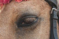 Eyes and eyelashes mare. Good and sad look horse.  stock photos
