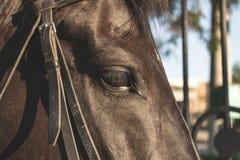 Eyes and eyelashes mare. Good and sad look horse.  royalty free stock images