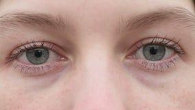 eyes flickabarn stock video