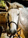 eyes häst s Arkivbild
